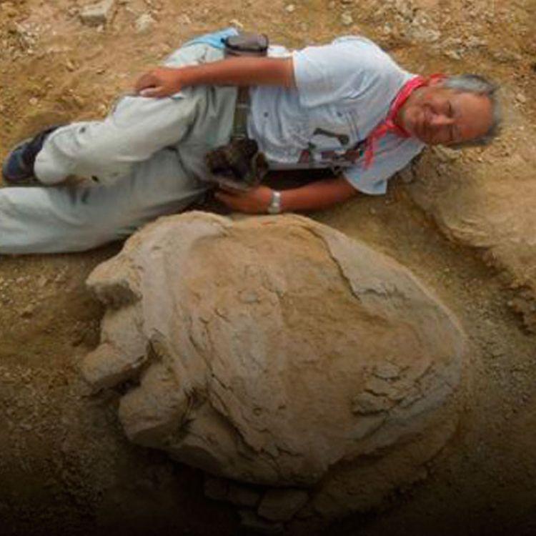 El tamaño sería el doble del tamaño deotros dinosaurios herbívoros del mismo período cuyos fósiles han sido encontrados enAsia.