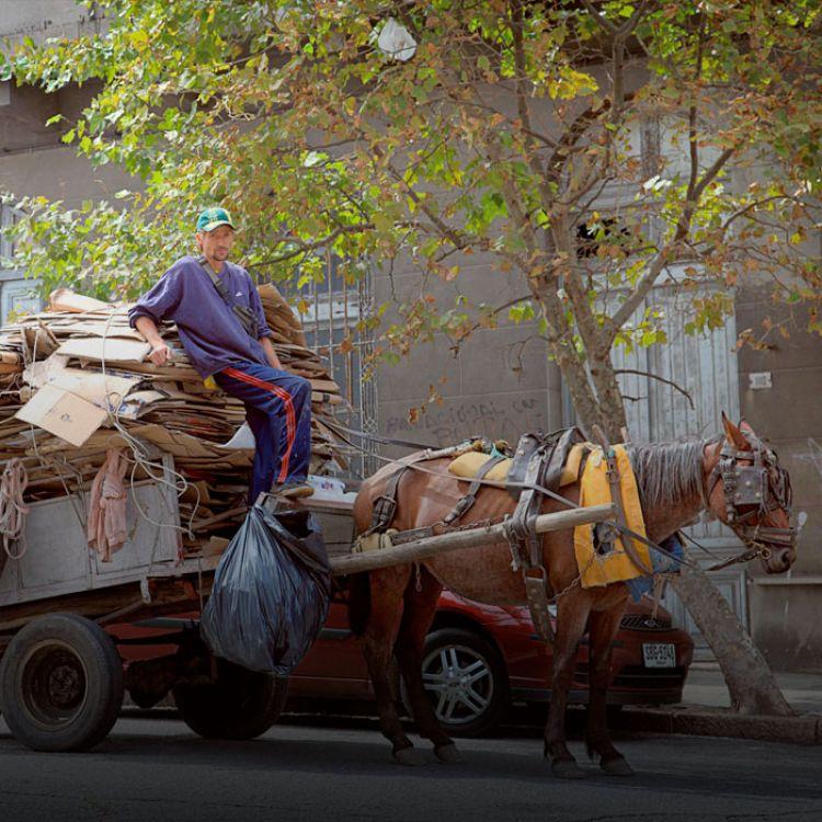 El objetivo es controlar y conocer el número de caballos que son utilizados como medio de transporte.