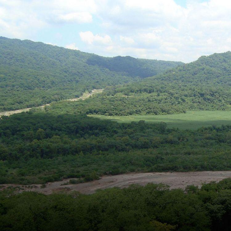 """Soler señaló: """"La idea escumplir y hacer cumplir los objetivos planteados por la ley de bosques""""."""