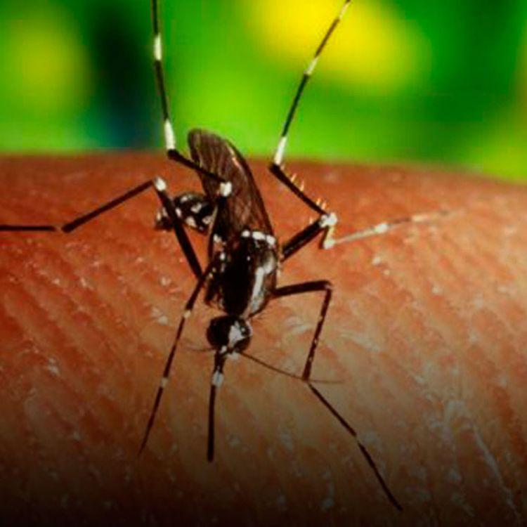 Actualmente, 45 países y territorios de las Américas confirmaron casos autóctonos por transmisión vectorial del virus