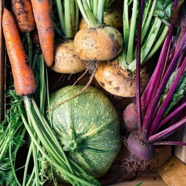 La agricultura orgánica debería ser la principal fuente de alimento de las personas.