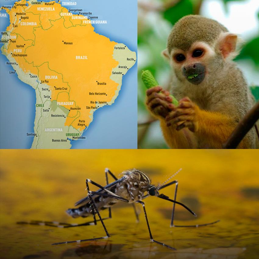 Fiebre amarilla: Alto riesgo para Misiones y Corrientes