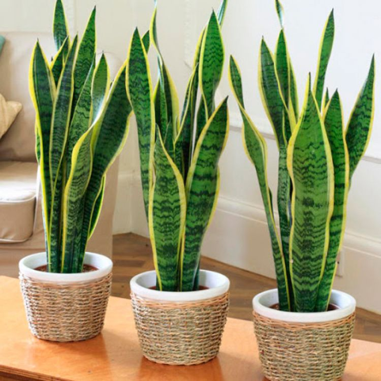 Cinco plantas para purificar el aire de tu casa