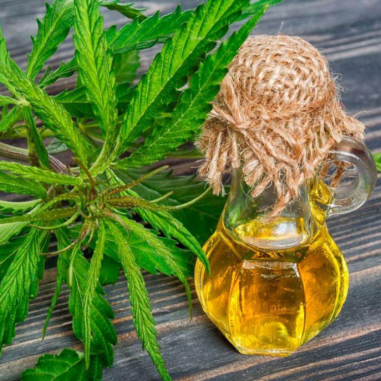 Abrirán una clínica de cannabis medicinal en Mendoza