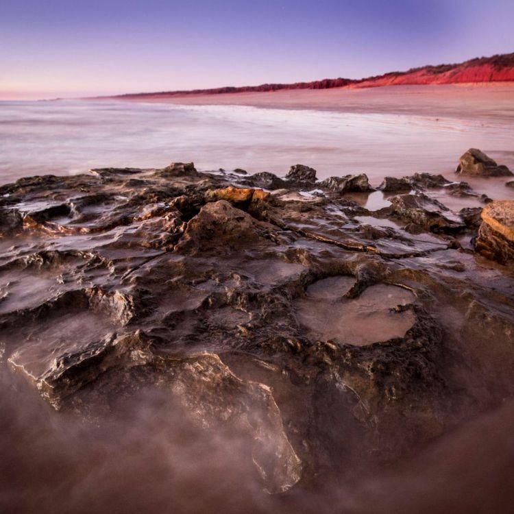 En Australia, identificaron 150 huellas de 21 especies de dinosaurios