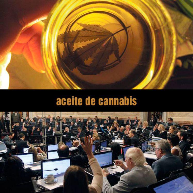 Por unanimidad, el Senado aprobó la ley de cannabis medicinal
