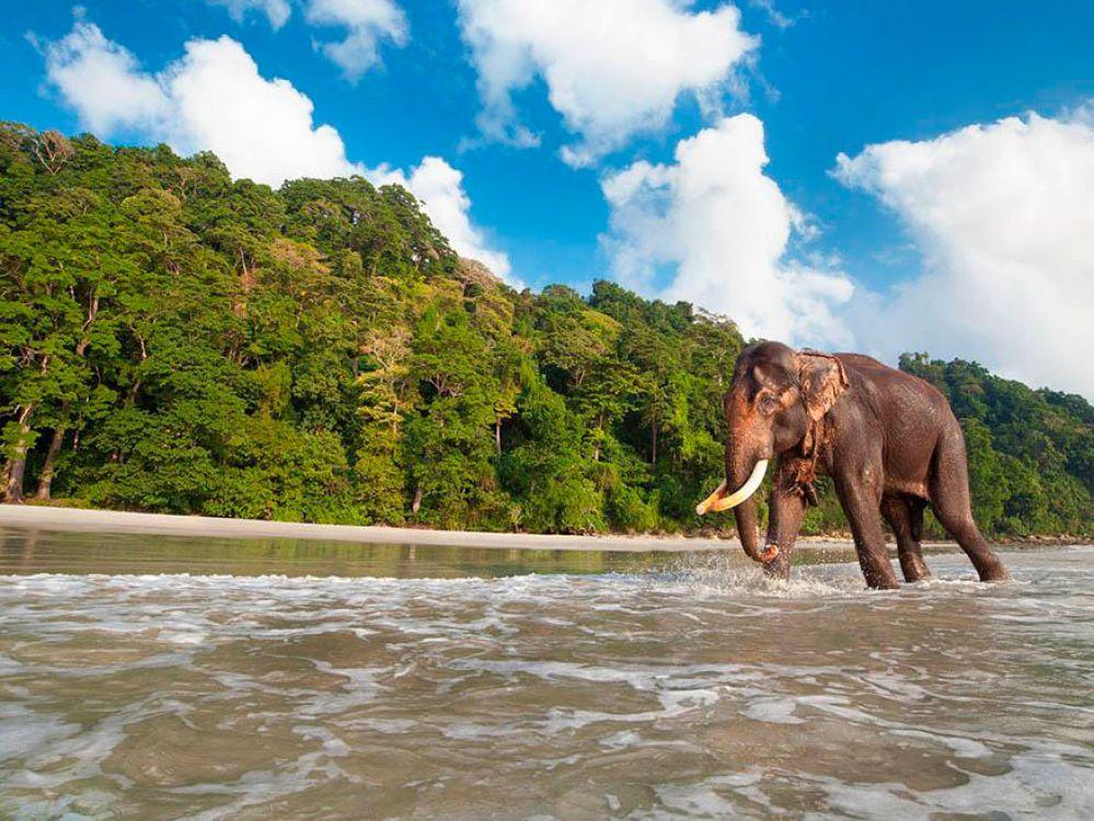 La isla Havelock, un santuario natural habitada por elefantes nadadores