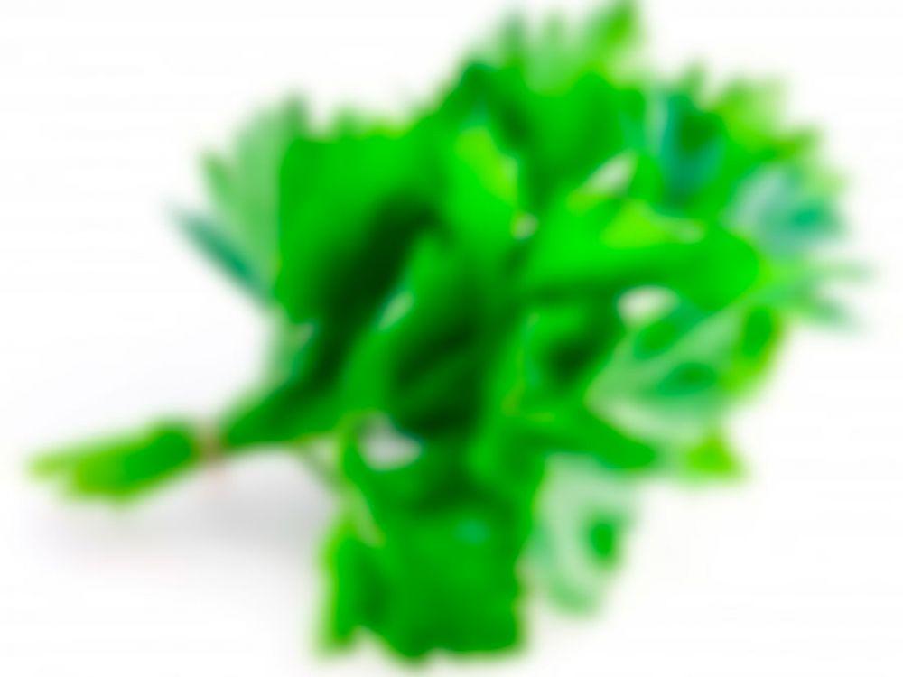 Con esta hierba puedes sanar riñones, páncreas, hígado y pulmones