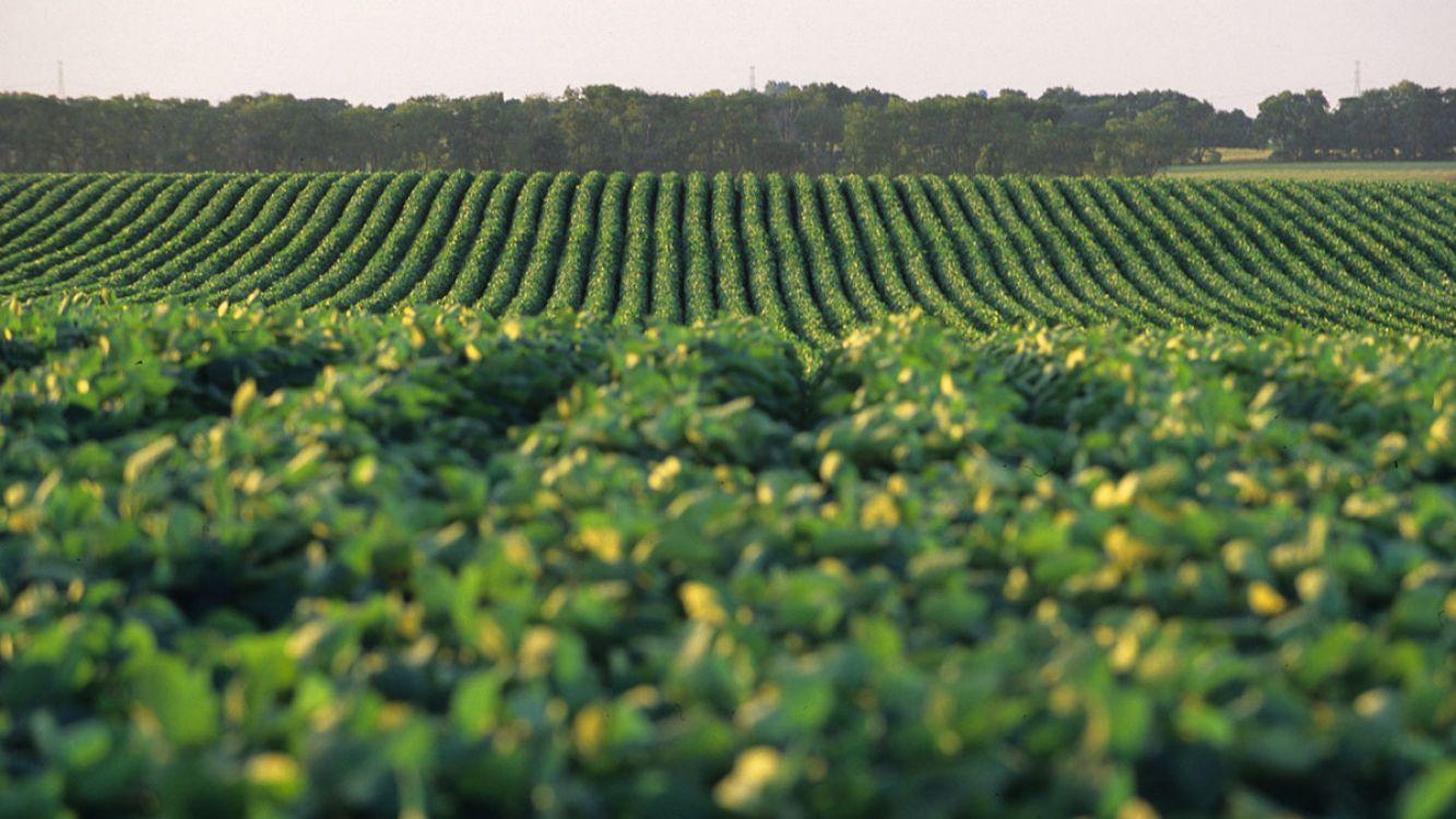Comenzó la cosecha de los primeros lotes de soja en Santa Fe