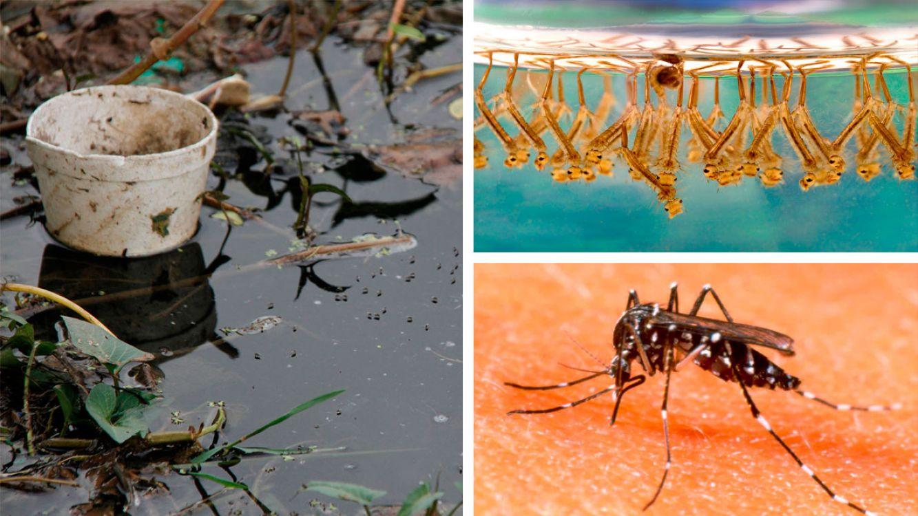 En 14 de cada 100 casas se detectaron criaderos de mosquitos del dengue