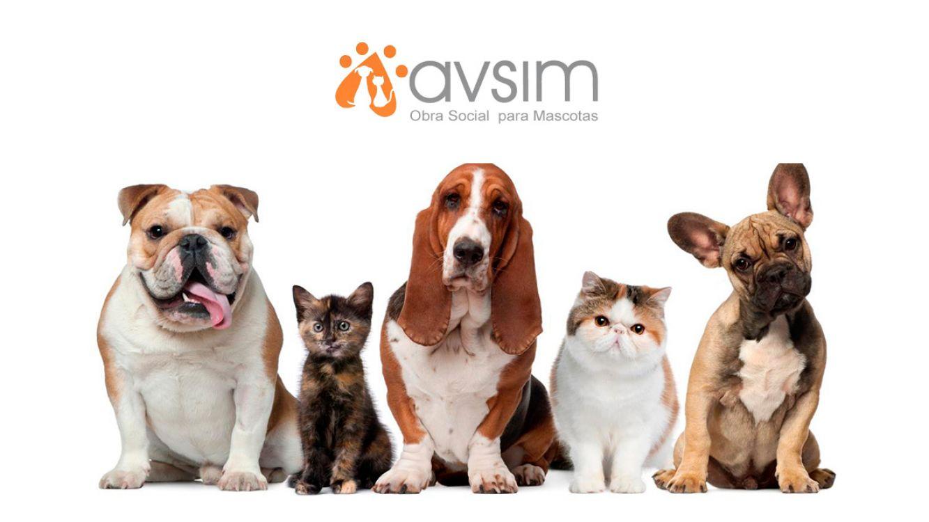 AVSIM, una obra social para perros y gatos en Salta