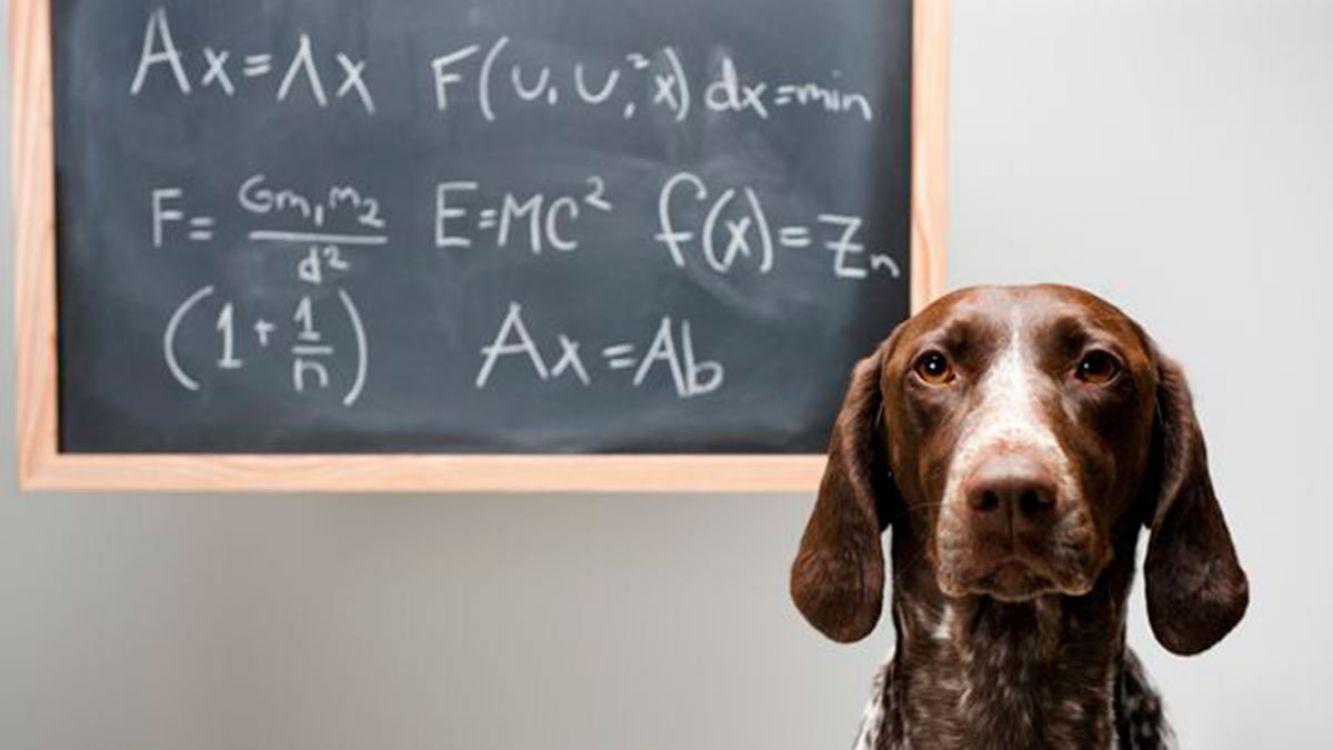 Los 5 datos científicos menos conocidos sobre los perros