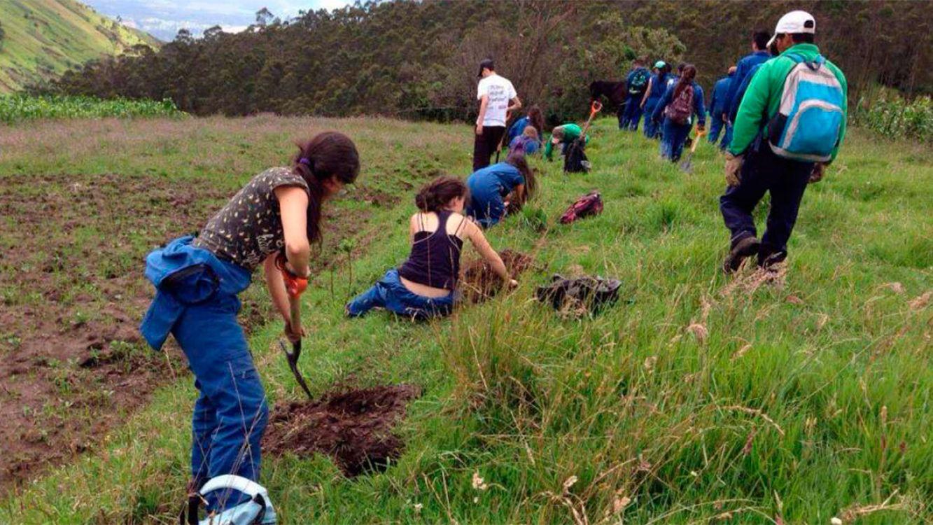 Foto Alusiva: Voluntarios plantaron 130 mil árboles en Tierra del Fuego para reforestar un bosque quemado