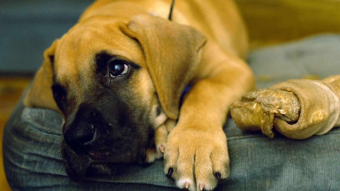 """""""La salud mental de los animales no tiene nada que ver con enfermedades, sólo están manifestando las emociones de la forma en que han sido tratados""""."""
