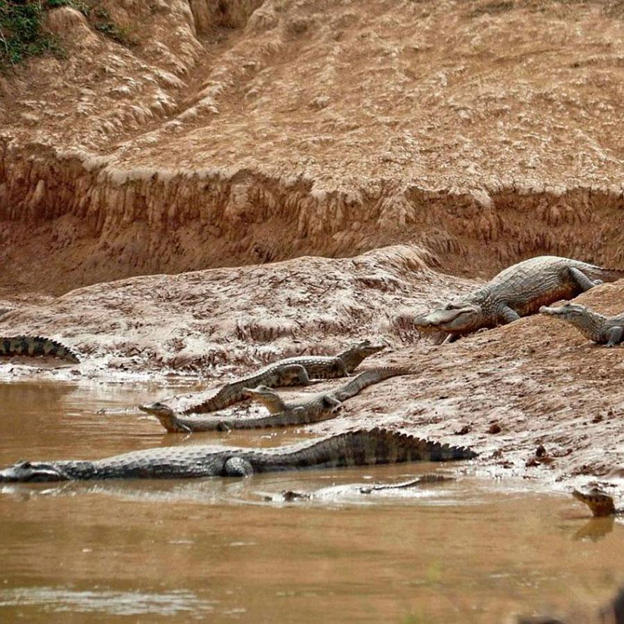 La sequía del Río Pilcomayo afecta a flora y fauna de la región.