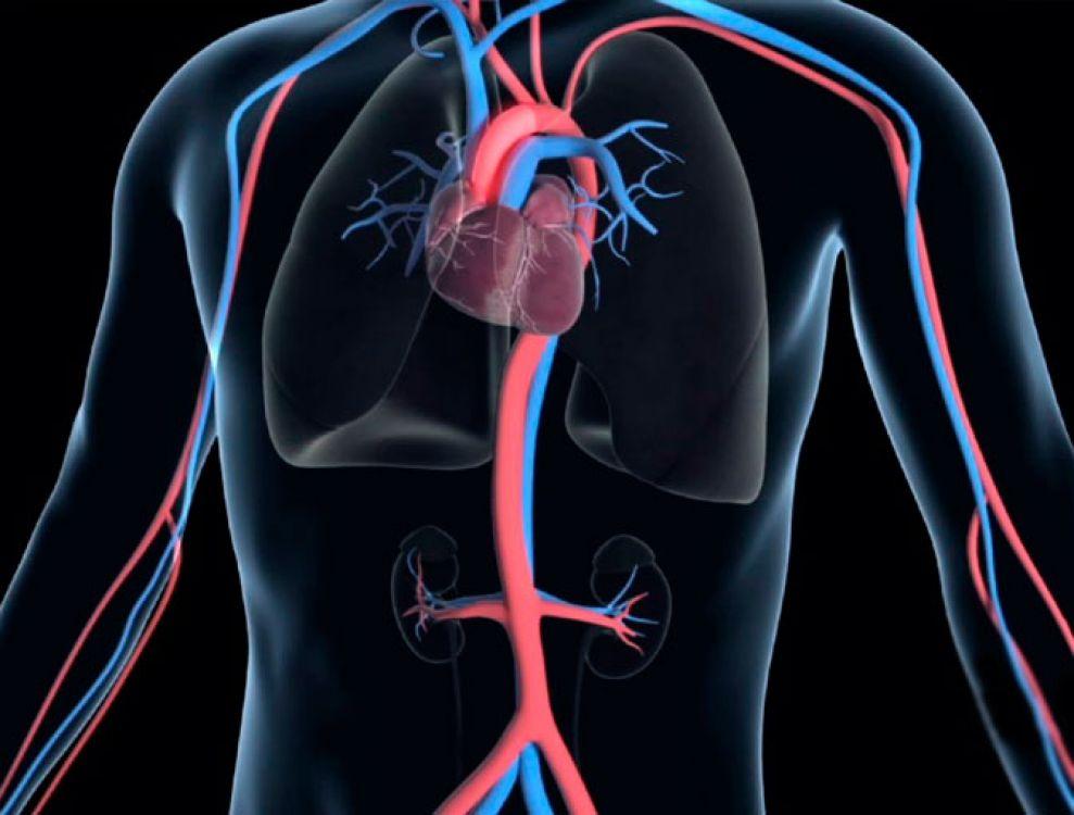 Una alimentación adaptada a este cuadro clínico puede ser de gran ayuda y tal vez un método natural para destapar las arterias.