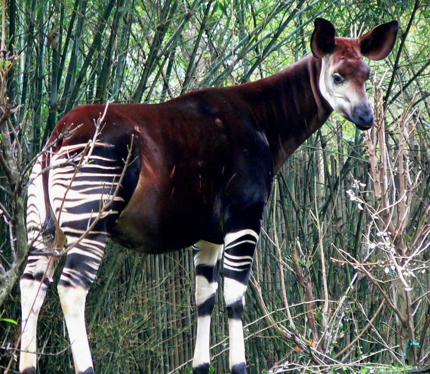 ¡Estas son las cinco razas de animales que de seguro no conocías!