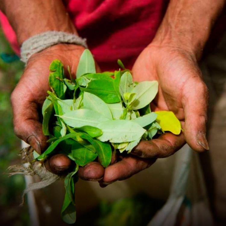 ¿Pretenden legalizar la importación de coca?