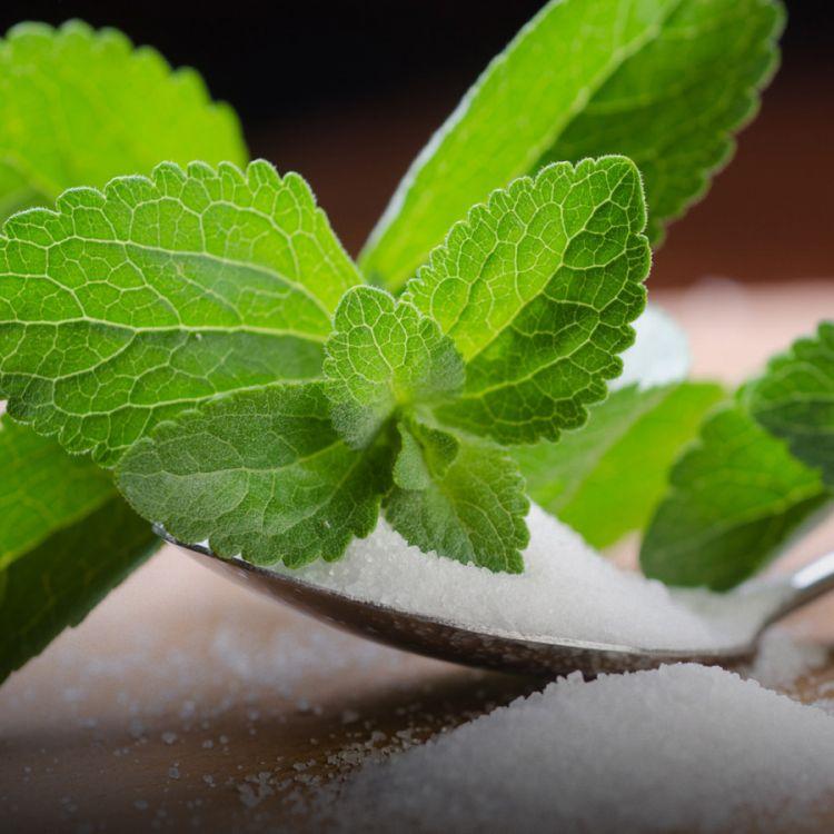 Stevia, un endulzante natural y sano