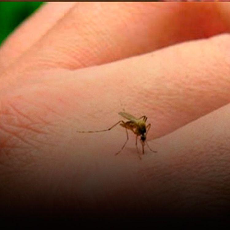 Durante 2016 se registraronbrotes de Denguecon transmisión extendida en la gran mayoría de las provincias.