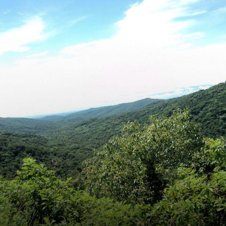 Es un modelo de desarrollo sustentable basado en el enriquecimiento, la restauración, conservación, aprovechamiento de bosques nativos.