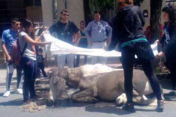La Justicia sigue sin amparar animales.