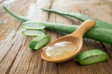 El aloe vea se puede usar para purgar y limpiar el intestino.