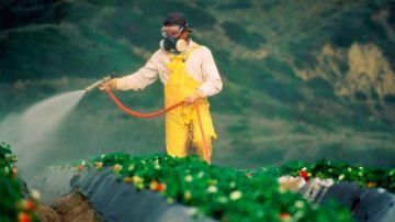 Los pesticidas