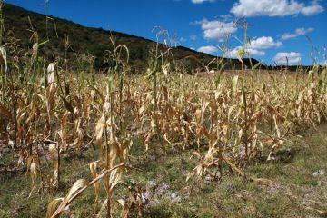 Daño a los cultivos