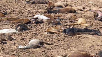 Extinción de especies de animales